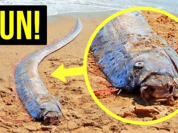 If You See This Fish, Find Shelter Fast (and Other Natural Disaster Warnings)