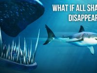 What If All Shark Species Suddenly Disappeared