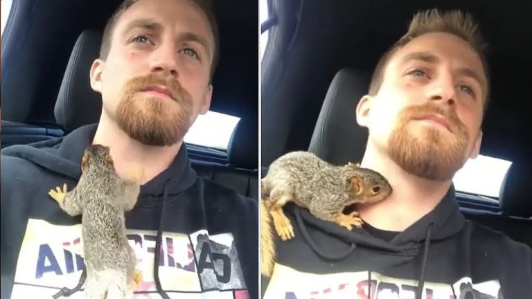 Baby squirrel climbs all over caretaker during car ride