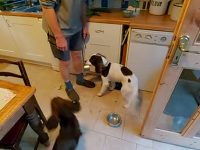 """Clever dog knows to collect the """"dishes"""" after dinner time"""