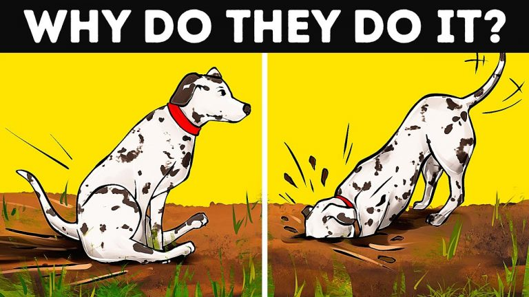 Why Dogs Roll Around After Bath and 14 Strange Behaviors Explained
