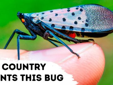 No Country Wants to See This Bug, Here's Why