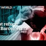 A cat refuge in Barcelona gets crowded because of Covid-19
