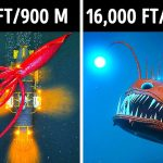 3D Journey to What's Hiding in the Ocean Depths
