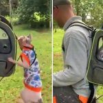 Explorer cat jumps into travel backpack
