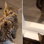 Kitten sees her reflection in the mirror for the first time