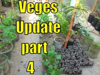Top 13 Easy To Grow Winter Vegetables For Beginners Part-4 36