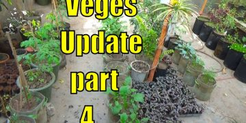 Top 13 Easy To Grow Winter Vegetables For Beginners Part-4 13