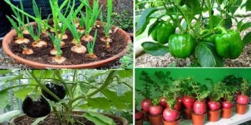 Top 10 easy to grow vegetables for beginners 8