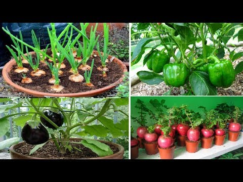 Top 10 easy to grow vegetables for beginners 1
