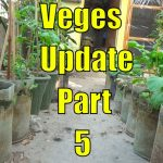 Top 13 Easy To Grow Winter Vegetables For Beginners Part-5 3