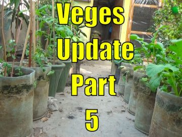 Top 13 Easy To Grow Winter Vegetables For Beginners Part-5 8
