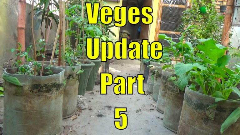 Top 13 Easy To Grow Winter Vegetables For Beginners Part-5 1