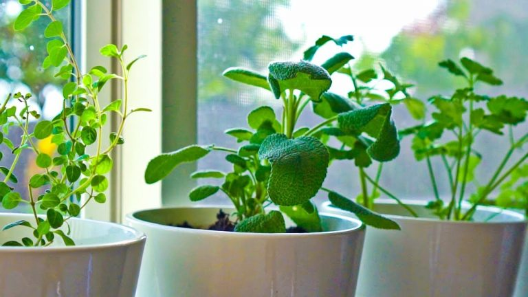 10 Herbs You Can Grow Indoors on Kitchen Counter 1