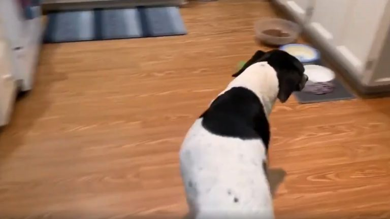 This dog's hilarious bedtime routine will have you in stitches!