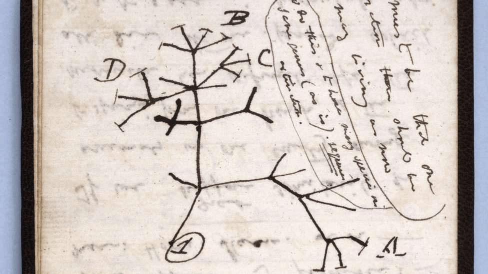 text: His Tree of Life sketch is among the missing notes