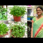 Organic Kitchen Garden : How to grow organic vegetables 3