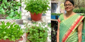 Organic Kitchen Garden : How to grow organic vegetables 21