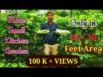 Make a Kitchen Garden in a Small Space// Sowing seeds to Harvesting of Fruits 10