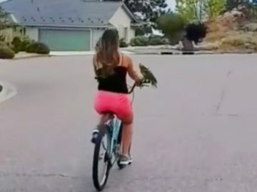 Parrot rides on bike's handlebars during majestic scenic ride