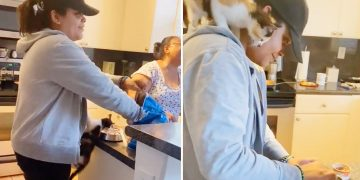 Hungry kitten can't wait anymore, climbs human to reach food