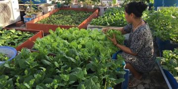 Harvesting Vegetables From My Rooftop Garden - Beautiful Urban Rooftop Garden 17