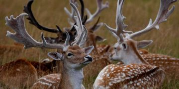 Police in the Czech Republic have put out an unusual request after a deer stole a hunter's gun 3