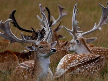 Police in the Czech Republic have put out an unusual request after a deer stole a hunter's gun 13