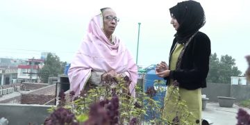A Lady grows 200 different Plants on her roof. 9