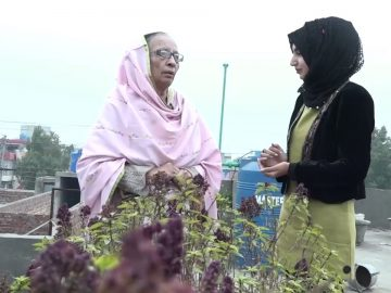 A Lady grows 200 different Plants on her roof. 15