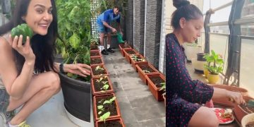 Preity Zinta Plucking Shimla Mirch From Her Kitchen Garden|Sachin Tendulkar,Shilpa Enjoy Gardening 14