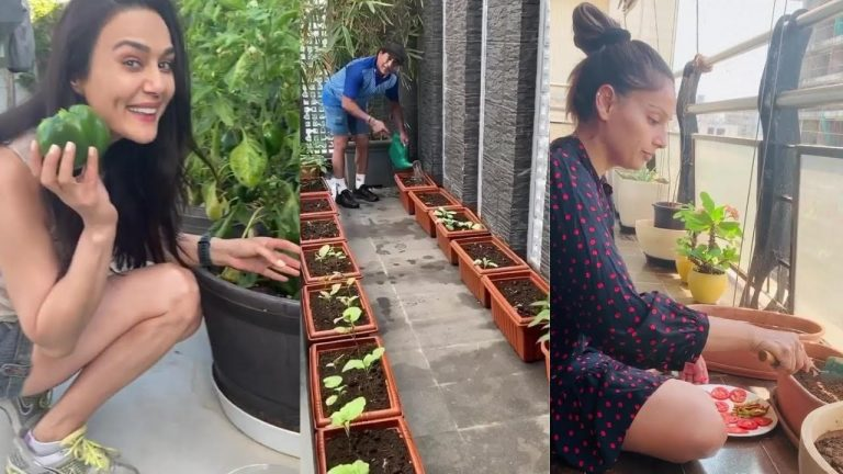 Preity Zinta Plucking Shimla Mirch From Her Kitchen Garden|Sachin Tendulkar,Shilpa Enjoy Gardening 1