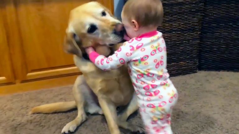 Adorable Babies Playing With Dogs and Cats - Funny Babies Compilation 2018 1