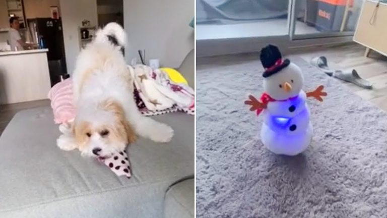 Grinch-like puppy not impressed with Christmas this year