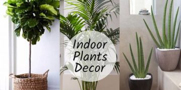 Home Decoration With Plants    Best Indoor Plants In India For Decoration