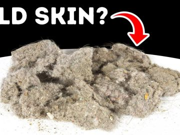 What Dust Is Really Made Of (It's Not Skin)
