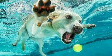 Funniest Animals 🐧 - Best Of The 2020 Funny Animal Videos 😁 - Cutest Animals Ever 18