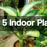Top 5 Best Indoor Plants - Easy to Grow Indoor Plants 1