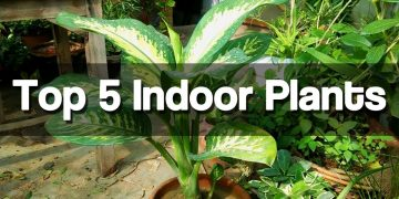 Top 5 Best Indoor Plants - Easy to Grow Indoor Plants 27
