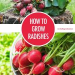 The International Space Station micro-farm can now grow radishes 1