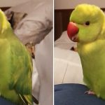 """Talking parrot says """"choo-choo train"""" with the cutest voice ever"""