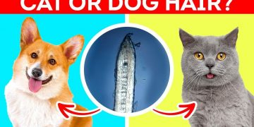 DOG or CAT HAIR? Human Body Parts Under 1000x Microscope