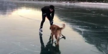 Skating dog joins owner to play hockey on frozen mountain lake