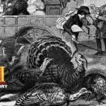 History of the Holidays: History of Thanksgiving | History 1