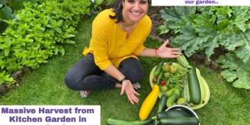 Vegetable Garden Tour- Aug Harvest Time| Massive Cucumbers in our Kitchen Garden| The Sangwan Family 23