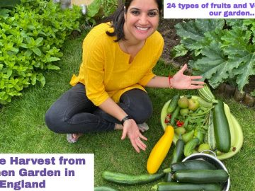 Vegetable Garden Tour- Aug Harvest Time| Massive Cucumbers in our Kitchen Garden| The Sangwan Family 29