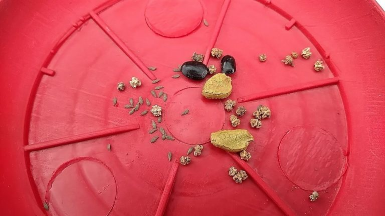 Top 6 Points About Seed    Seeds Are Base of the Kitchen Gardening    Video Complete Watch Krain 1