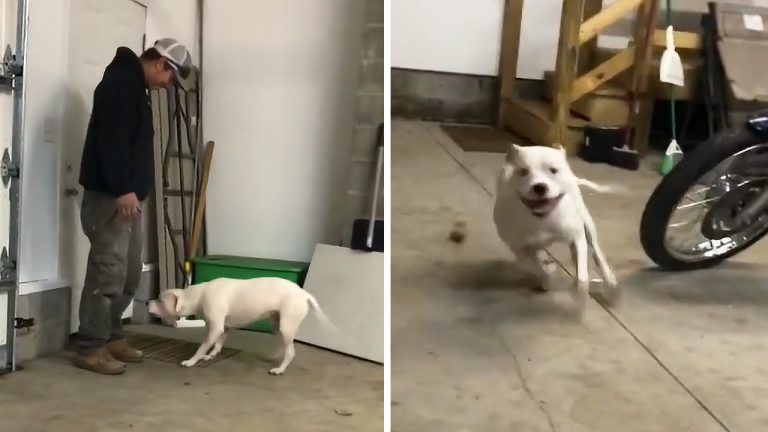 Pup goes bonkers after two weeks apart from owner