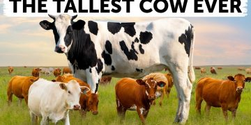 12 Biggest Animals Are Megs of Their Species