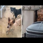 Man goes to check on his dogs, finds something peculiar instead